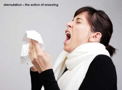 sternutation the action of sneezing