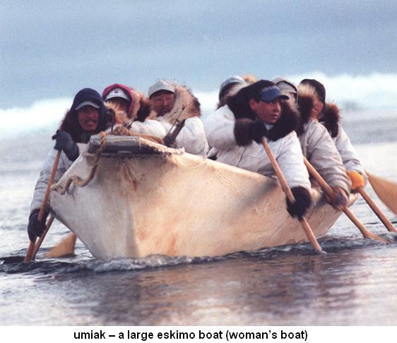 Umiak large eskimo boat womans